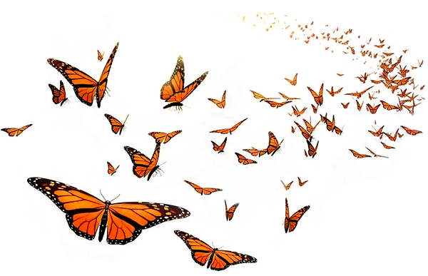 butterfly-flying-silhouette-5.png