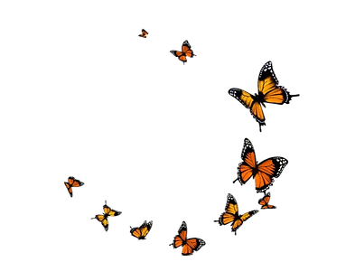 flying%20butterlys_edited.png
