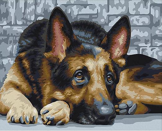 Paint by Numbers German Shepherd