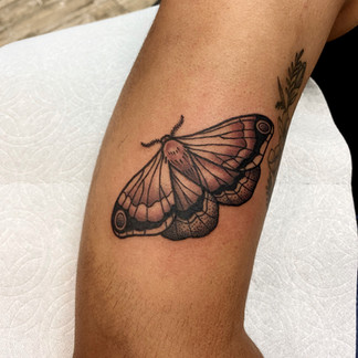 butterfly moth tattoo