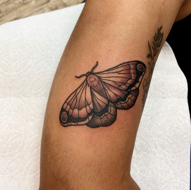 butterfly moth tattoo