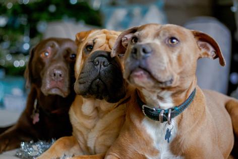 Maisie, Lola and Ferdie