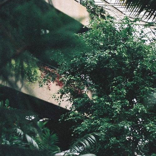 City Conservatory