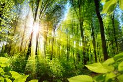 Energy, solar energy, sustainability, environment, energy compliance