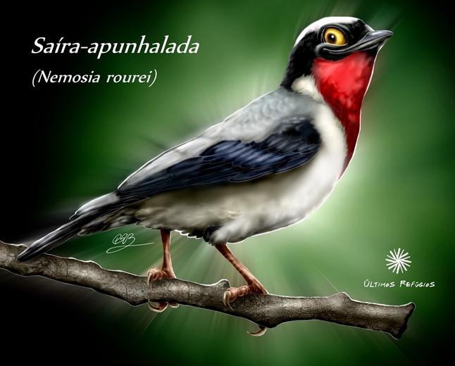 Espírito Santo na Feira de Observadores de Aves em São Paulo