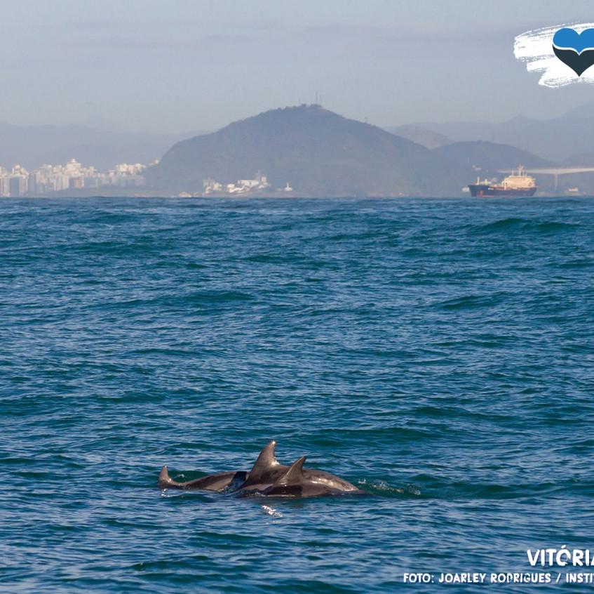 Grupo de Golfinhos nadando no litoral ca