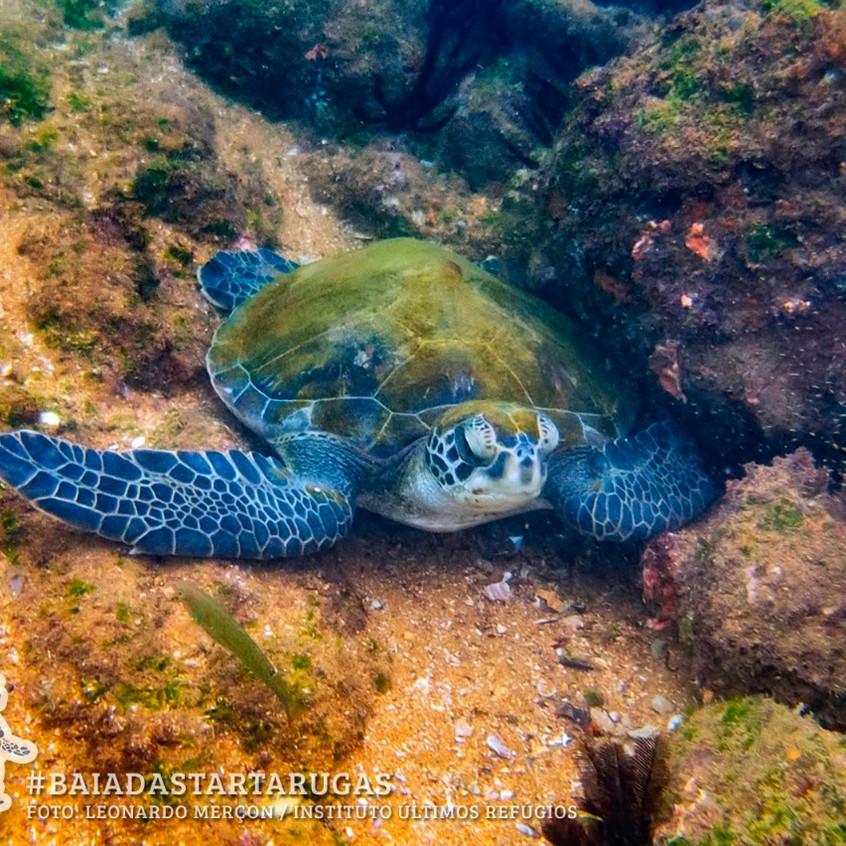 Tartaruga-verde repousando no fundo do m