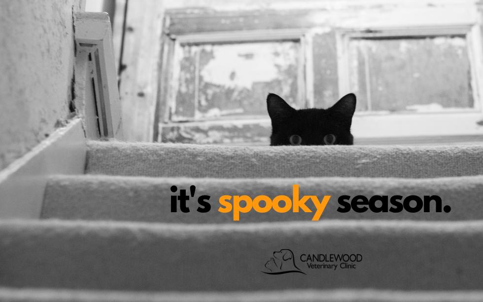 spooky season.png