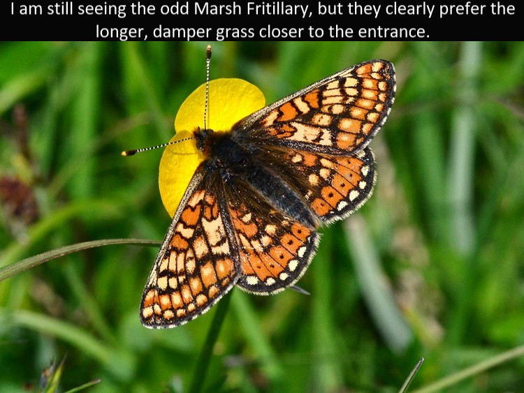Marsh_Frit5_Cotley_Hill_31May13rs.jpg
