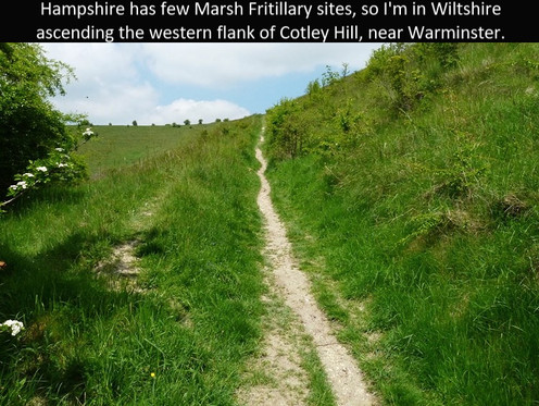 Cotley_Hill1_31May13rs.jpg