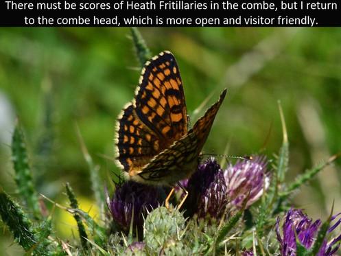Heath_Frit14_Bin_Coombe_3Jun11rs (2).jpg