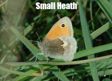 Small_Heath_N1_StockDown_19_Aug06spy.jpg