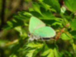 Green H2 Blog.jpg