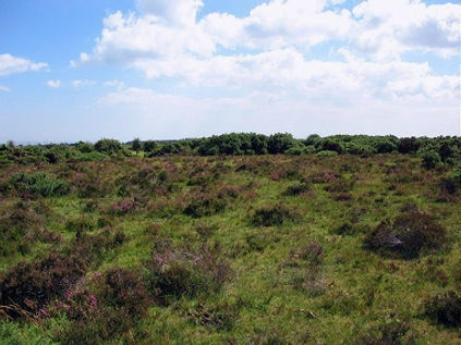 Beaulieu_heath1rs.jpg