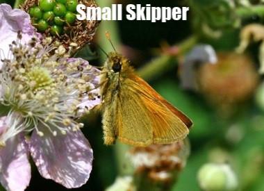 Sm_Skipper_Whiteley_P_5Jul12spy2.jpg