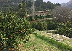 Orangenduft und Dorfromantik in der Abendstimmung von Fornalutx + Abendessen auf einer urigen Finca