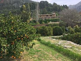 Orangenduft und Dorfromantik in Fornalutx mit privatem Finca Mittagessen