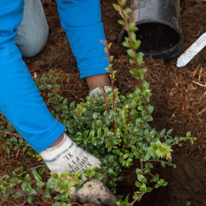 Revegetation planting and rural subdivision in Auckland