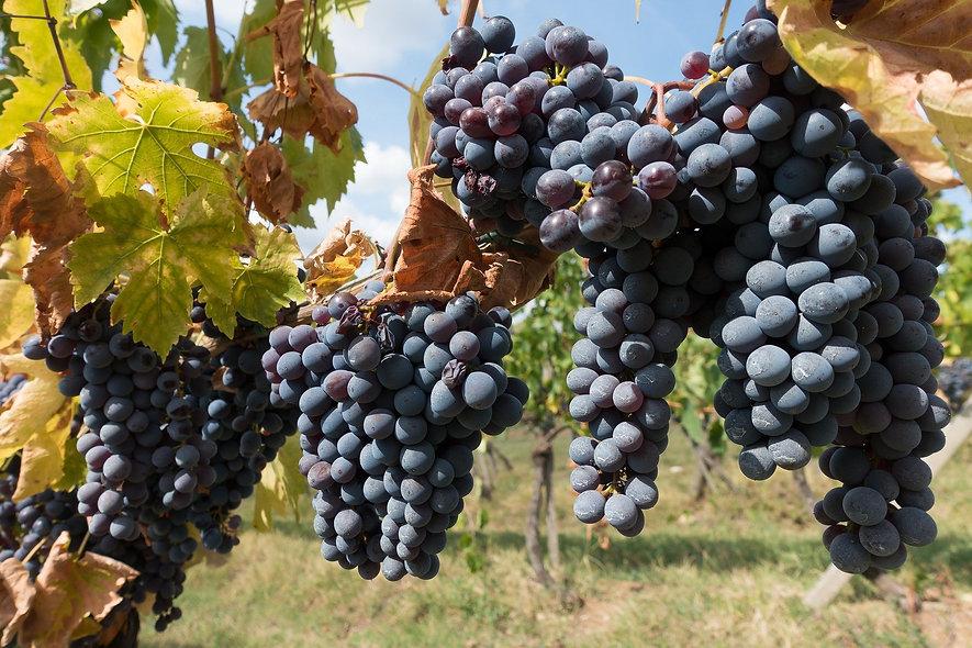 winegrowing-972891_1920.jpg