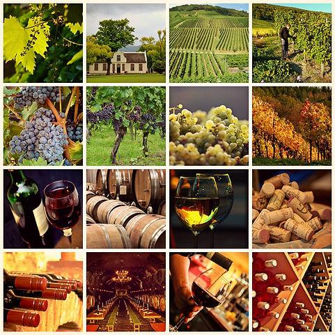 Autour du Vin.jpg