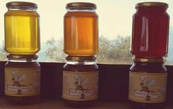 miele - sapore in tavola