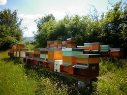 api - sapore in tavola