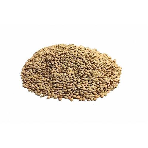 Lenticchie verdi Bio - Buonamassa