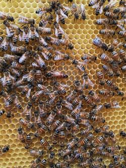 ape regina - sapore in tavola