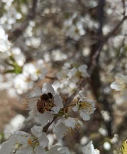 ape - sapore in tavola