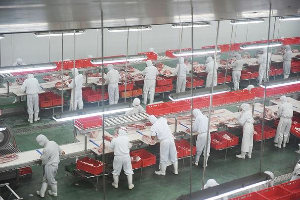 Operai specializzati lavorano della carne trasportata su rulli.