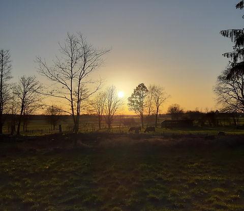 ...die Stellplätze an der Gallowayweide -  langsam geht die Sonne unter...