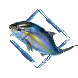 Driftset Fishing-Target icon_Amberjack_2