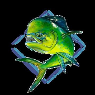 Driftset Fishing-Target icon_Mahi Mahi.p