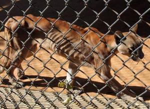 Los animales de un zoológico de Venezuela sufren desnutrición severa por la falta de comida