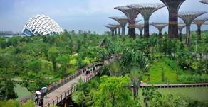Cidades Biofílicas - Solução natural para um mundo melhor