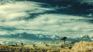 L'albero che sfidava le montagne