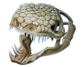 Gila Monster, Bone Collection, Skulls.