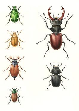 Beetles, The wildlife Trusts Handbook of Garden Wildlife