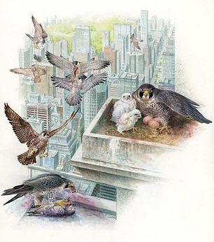 New York Peregrines, World of Animals