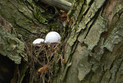 Wonder what kind of bird these eggs belong to?