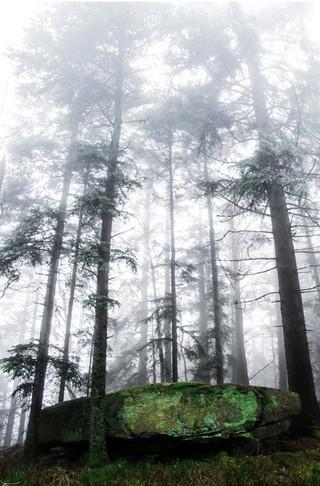 Magic forest 4