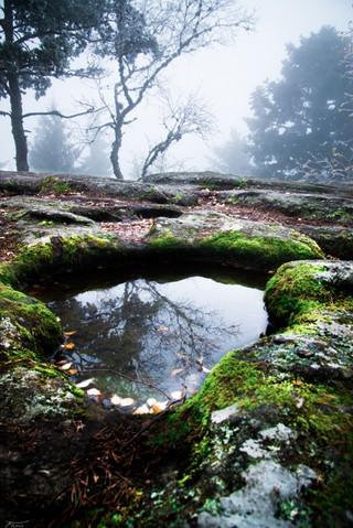 Magic forest 6