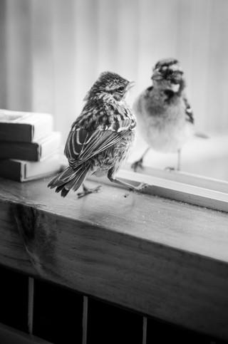 bird on window 2