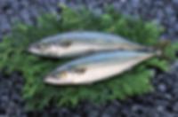 fish002.png