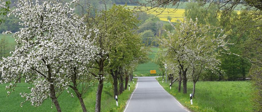 Baumblüte am Hüttenhau