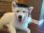 Dog Obedience Training Graduate
