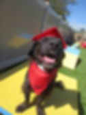 Smart Dog Training Graduate!