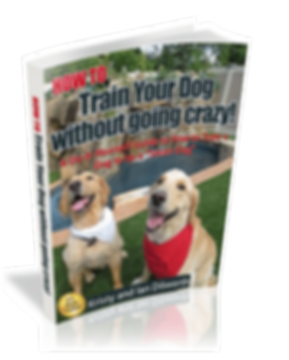 How to Train your dog without going crazy