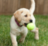 Dog Parks in Chicago and Chicagoland Suburbs