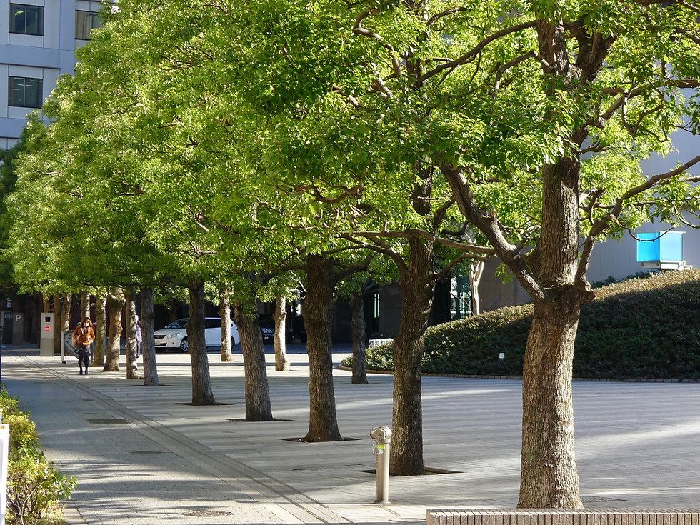 urban_trees 4.jpg